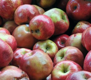 bushel-of-applescut